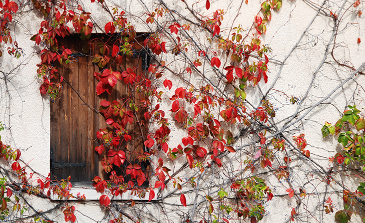Traditional wooden window from a house in Cyprus with foliage