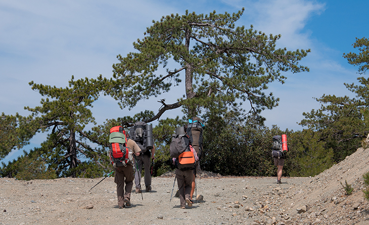 Group of tourists climbing mountain trail through the huge pine on Cyprus