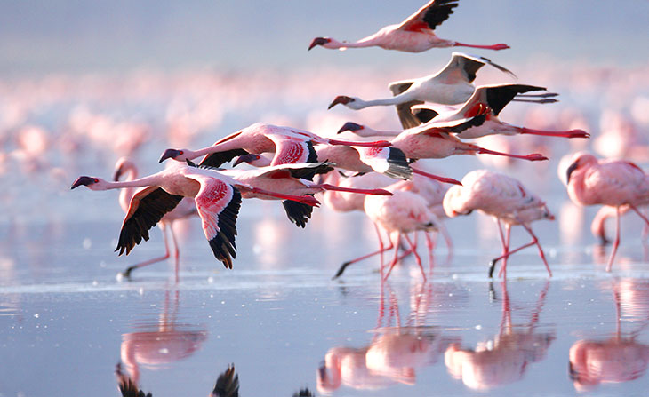 Flamingos in Cyprus