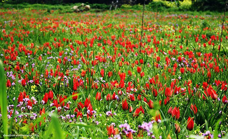 3 of the best spots in cyprus to see beautiful spring flowers my 3 of the best spots in cyprus to see beautiful spring flowers mightylinksfo